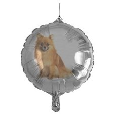Pomeranian dog, on white background Balloon
