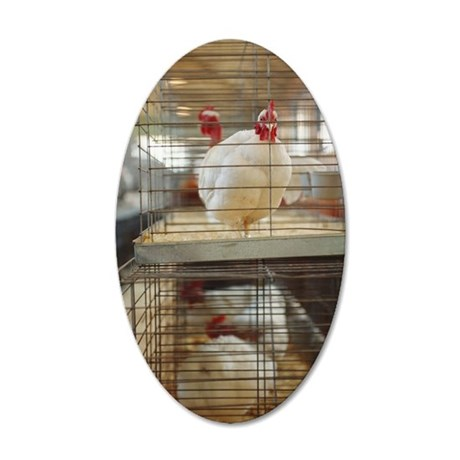 Leghorn chicken in cage 35x21 Oval Wall Decal