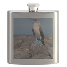 North Seymour Island. Flask