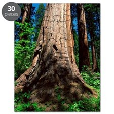 Redwood trees Puzzle