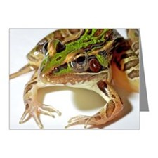 Leopard frog on white studio Note Cards (Pk of 20)