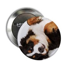 "Bernese Mountain Dog Berner Sennenhun 2.25"" Button"
