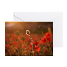 Plant poppy flower field Greeting Card