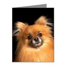 Pomeranian dog on red pillow Note Cards (Pk of 10)