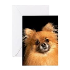 Pomeranian dog on red pillow, studio Greeting Card