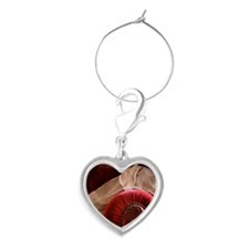 Weimaraner sleeping on red velvet Heart Wine Charm