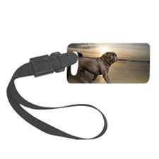 Pug walking along beach at sunse Luggage Tag