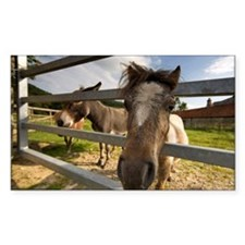 Horses looking through fence Decal