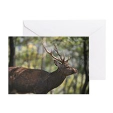 Male Hokkaido Sika deer in forest Greeting Card