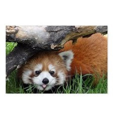Red Panda at Calgary Zoo Postcards (Package of 8)