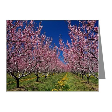 Peach orchards in bloom Note Cards (Pk of 10)