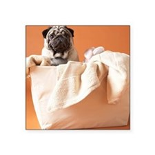 "Dog in laundry basket Square Sticker 3"" x 3"""
