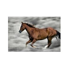 Running horse Rectangle Magnet