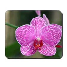 Close-up of orchid Mousepad