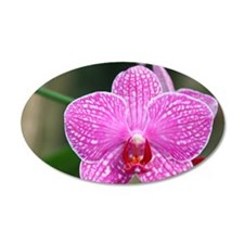Close-up of orchid Wall Decal