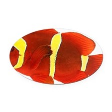 Spine-cheek anemonefish Premnas bi Oval Car Magnet