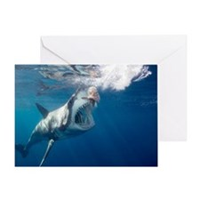 Great white shark arching body and o Greeting Card
