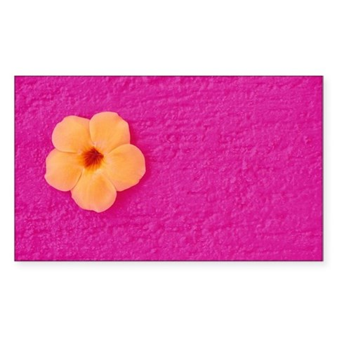 Flower head on pink wall Decal