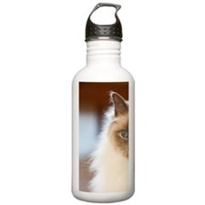 Sacred birman cat with Sports Water Bottle