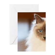 Sacred birman cat with blue eyes sit Greeting Card