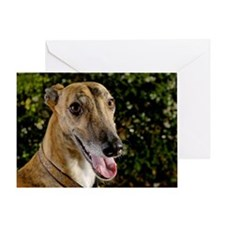 Greyhound dog outdoors Greeting Card