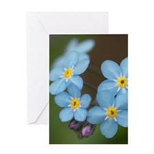 Beautiful blue Forget-me-not Greeting Card