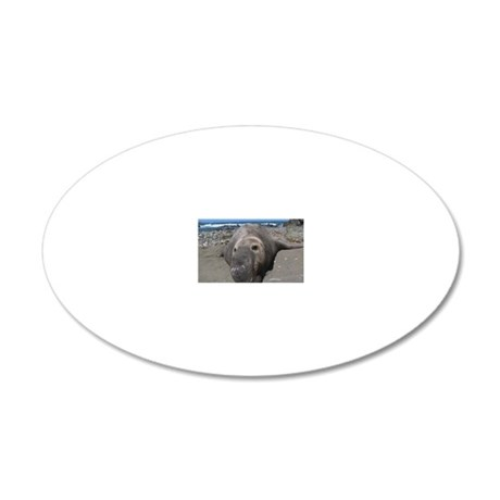 Elephant Seal, San Benitos I 20x12 Oval Wall Decal