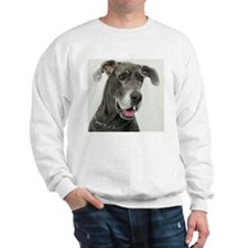Great Dane, close-up Sweatshirt