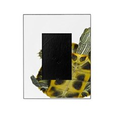Red-eared slider turtle Trachemys sc Picture Frame