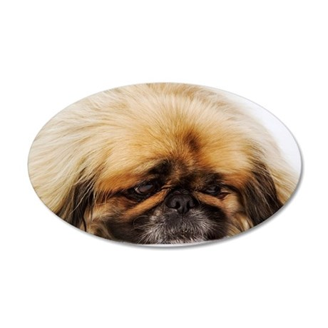 Pekingese on white backgroun 35x21 Oval Wall Decal