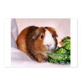Guinea Pig and Greens Postcards (8)