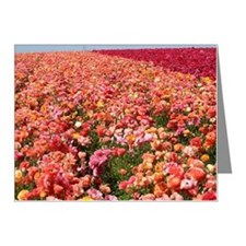 Field of Ranunculus Flowers Note Cards (Pk of 20)