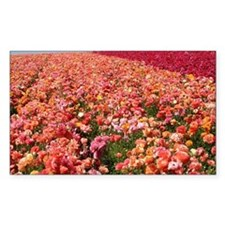 Field of Ranunculus Flowers Decal