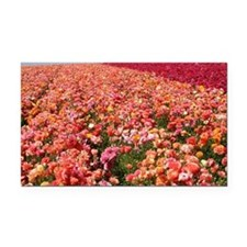 Field of Ranunculus Flowers Rectangle Car Magnet