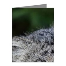 Pallas Cat Note Cards (Pk of 10)