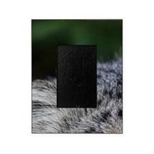Pallas Cat Picture Frame