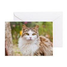 Cat, Costa Smeralda, Sardinia, Italy Greeting Card