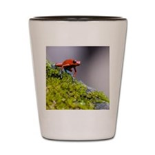 Strawberry Poison-dart frog Dendrobates Shot Glass