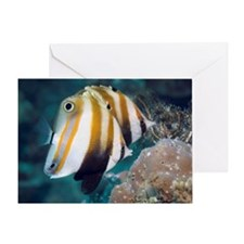 Orange-banded coralfish Coradion chr Greeting Card