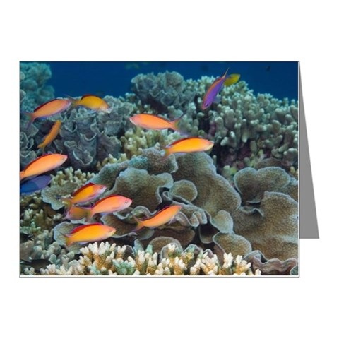 Peach or redfin anthias Pseu Note Cards (Pk of 10)