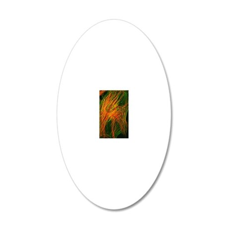 Fibroblast culture cell, lig 20x12 Oval Wall Decal