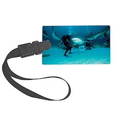 Shark feeding Luggage Tag