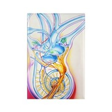 Inner ear Rectangle Magnet