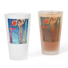 Kidney filtration system Drinking Glass