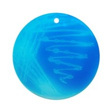 Bacterial culture Round Ornament