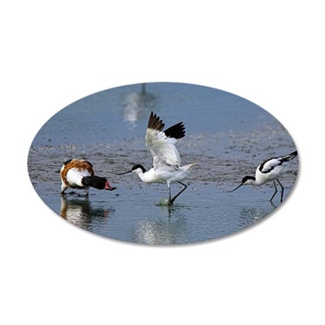 Territorial pied avocets 35x21 Oval Wall Decal