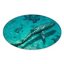 Tiger shark Decal