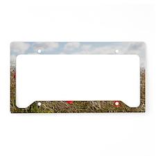 France, Picardy, Somme, Pont  License Plate Holder