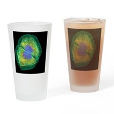 HaCaT culture cell, light micrograp Drinking Glass