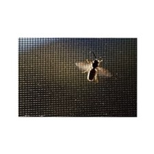 Bee on Screen Door Rectangle Magnet